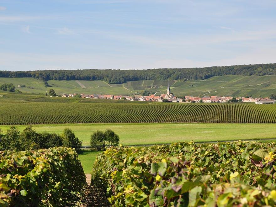 Epernay Hautvillers and two producers